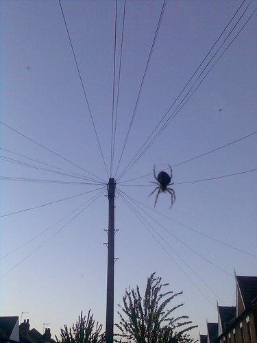 Spider making a web of phone lines
