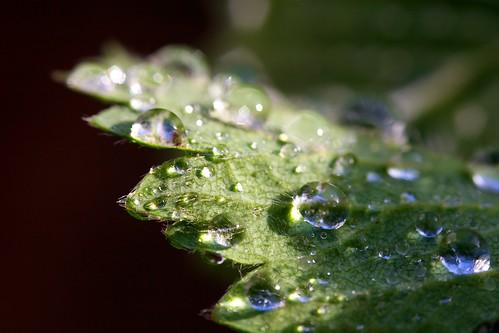 11/30 - Water drops