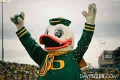 Oregon Duck