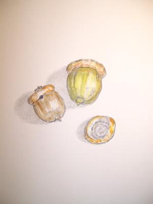20100908_acorn4
