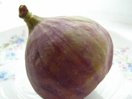 Figs 01