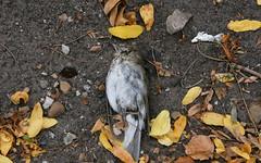 #262 dead bird