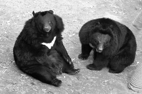 ANIMALS ASIA FOUNDATION-2010  MATILDA ON LEFT