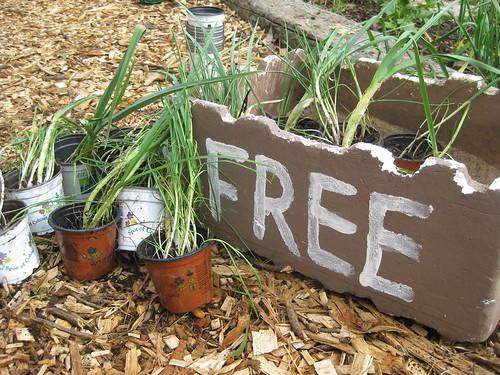 free leeks