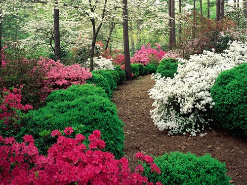 Azaleas_and_Boxwood_display