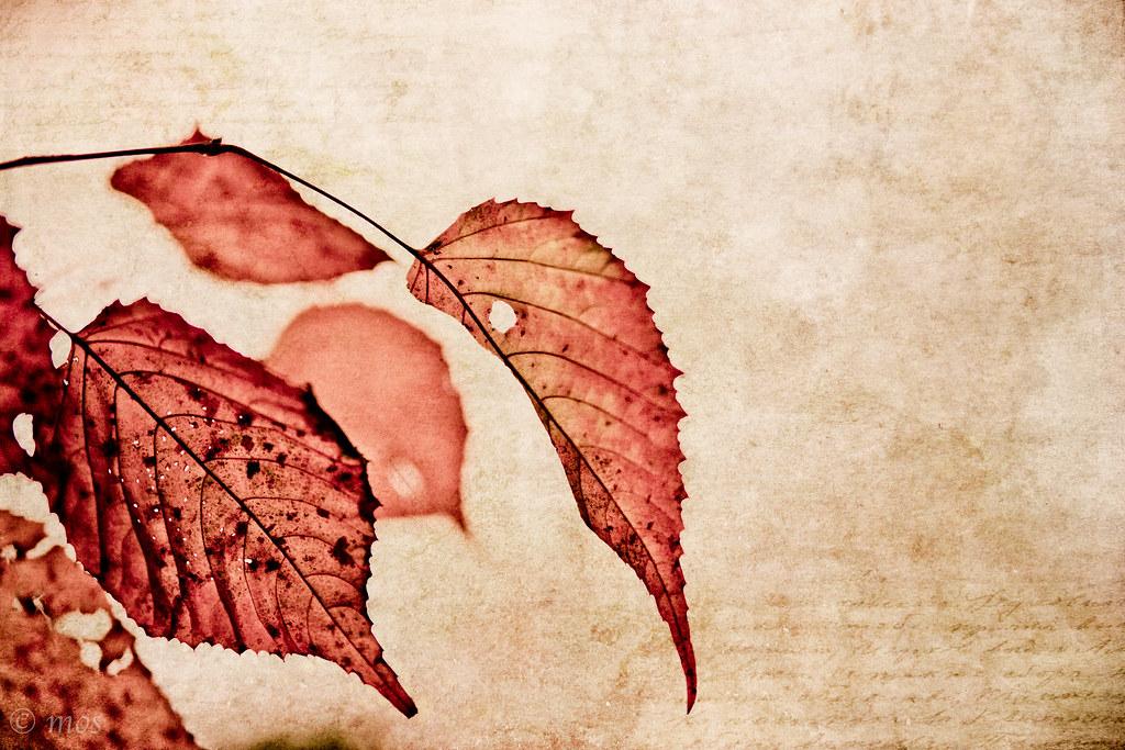 red in late November