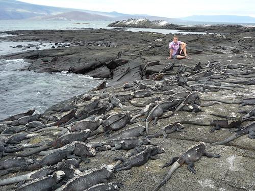 Marine Iguanas und Friedrich, Galapaos Islands