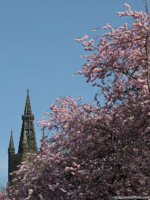 Blossoming Spires