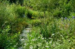 Il giardino (cartoline dall'estate 2010, 3)