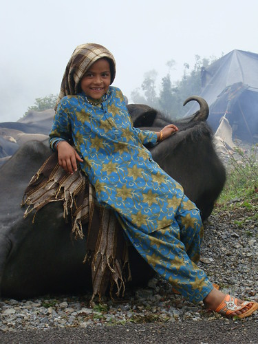 Gujjar child resting against buffalo on trek in the Himalayan foothills