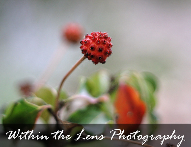 plant life, plants, berries, stems, photography, within the lens