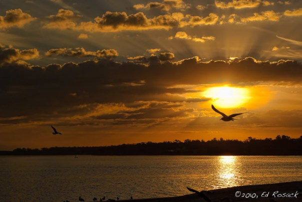 Morning Gulls on Lake Monroe