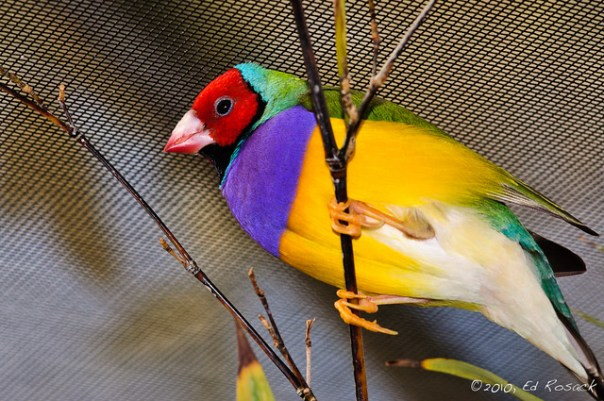 Cartoon colors bird