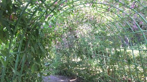tunnel of bushclover