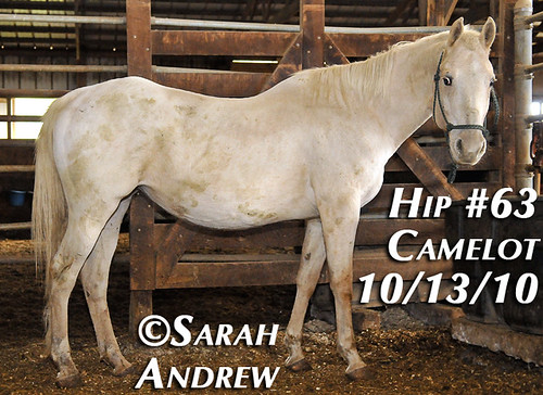 Hip #63
