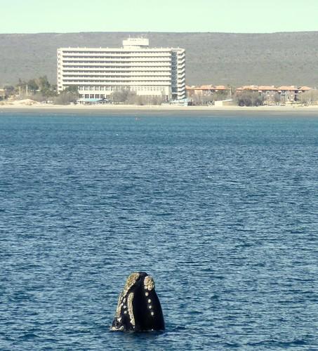Ballenas con vista a Puerto Madryn