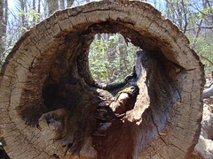 Hollow Log