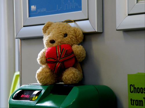 Bear on a Melbourne Tram