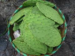 Nopales - Kaktus zum Essen