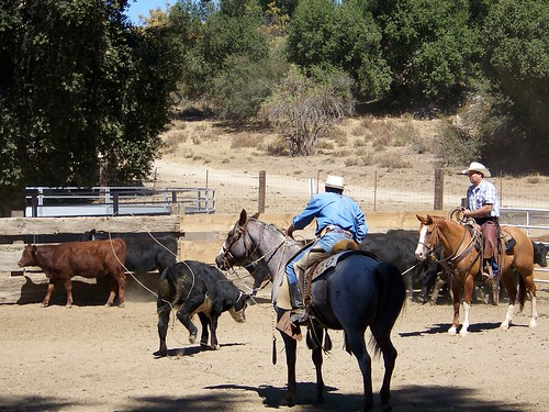 ranch roping #3.9.2010