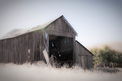 Abandoned Barn on the Beautiful Farm