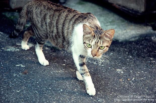Cat。心念所至02.JPG