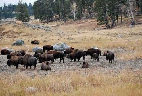 USA_174_Yellowstone_91