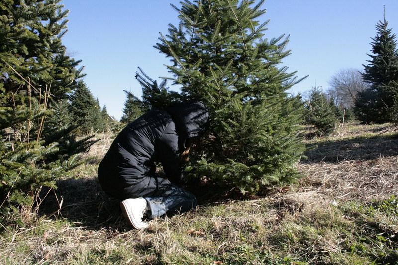 christmas tree standing
