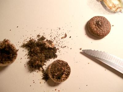 20100908_acorn6
