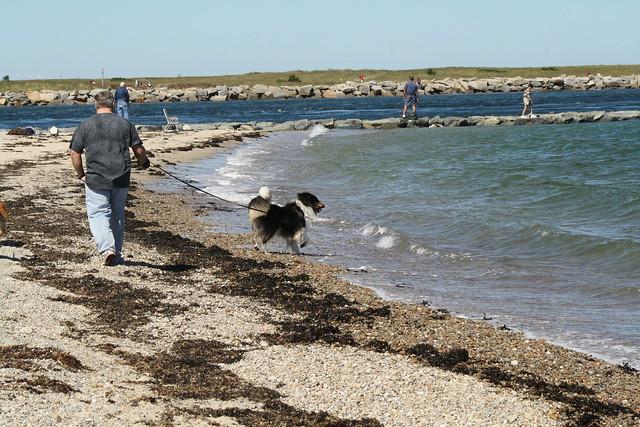 teddy beach
