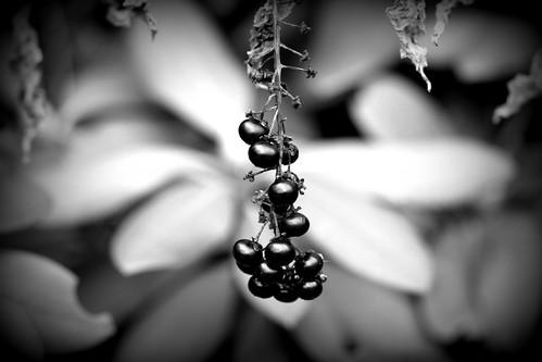 Black and white berries