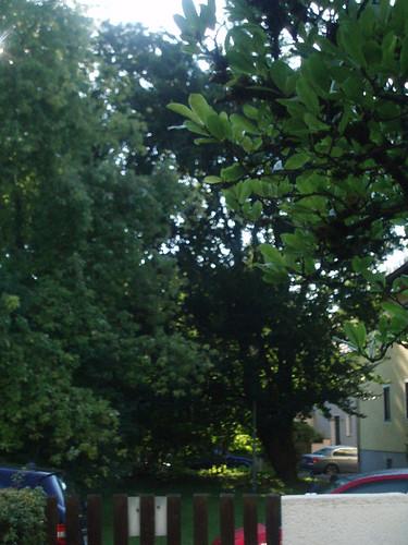 Zwölf2010_Sept1