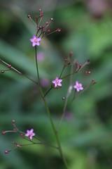新治市民の森の花
