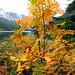 Eaton Lake in the Fall