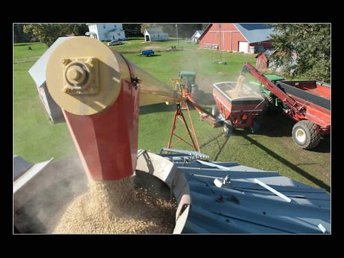 Soybeans in the Bin
