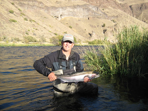 Deschutes River Steelhead