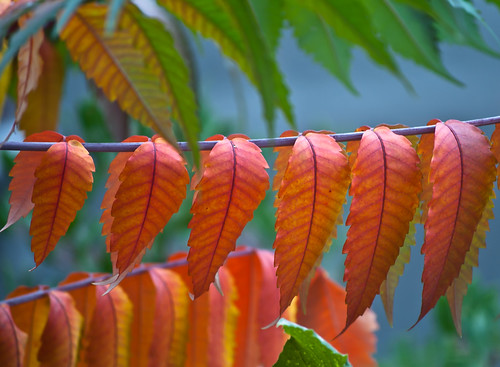 """Lined Up - """"Nature's Clothesline"""""""