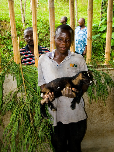 """Participant in semi-intensive """"cut-and-carry"""" goat production model using soil conservation fodder production plots. Holding the first of the improved breed baby goats."""