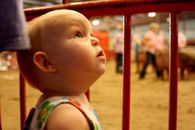 county fair - 05