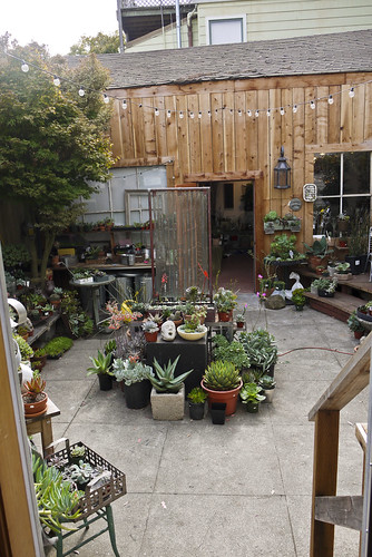 Succulence, a great plant shop in Bernal Heights