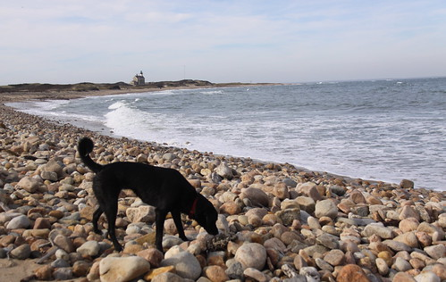 Black Dog on the Beach - Block Island, RI
