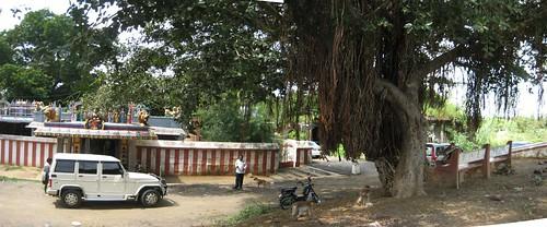 Hillbase Ellaiamman temple 1