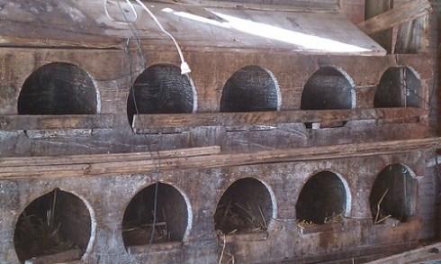 Hen laying bins