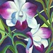 orchids with grey background