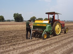 Sowing wheat on conservation agriculture plot