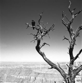 TREE:IV
