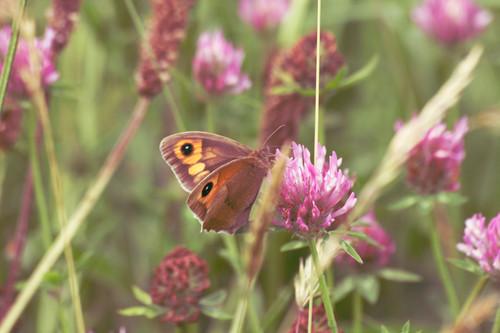 In a June Meadow