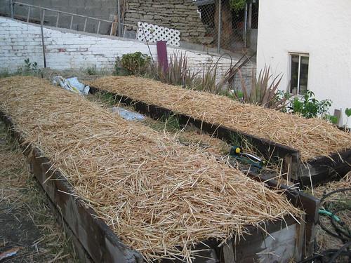 Garden 6: Hay layer watered down