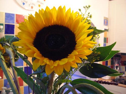 Day Fourteen - Sunflowers 02