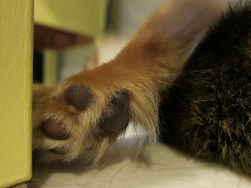 Tender Toes
